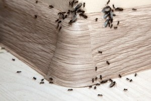 Bed Bugs, Pest Control in Teddington, Fulwell, TW11. Call Now 020 8166 9746
